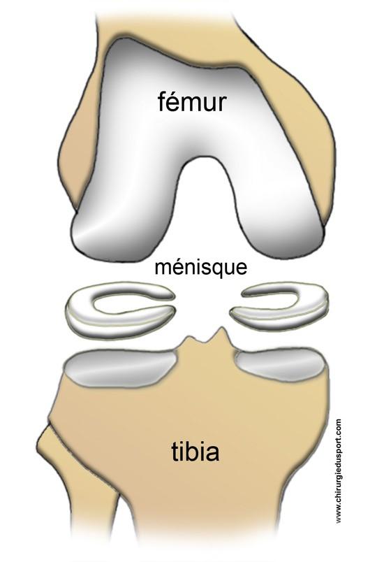 funzione menisco