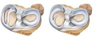 anatomia ginocchio umano
